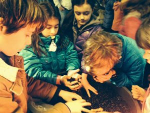 Barrington Elementary Students Examine Coffee