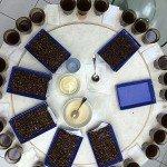 Crimson Cup coffee buyers cupped coffee in Guatemala
