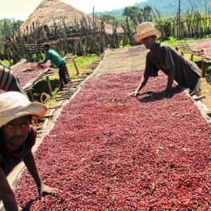Crimson Cup Ethiopia Burka Gudina coffee