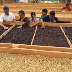 Rooftop coffee drying beds at NARSA