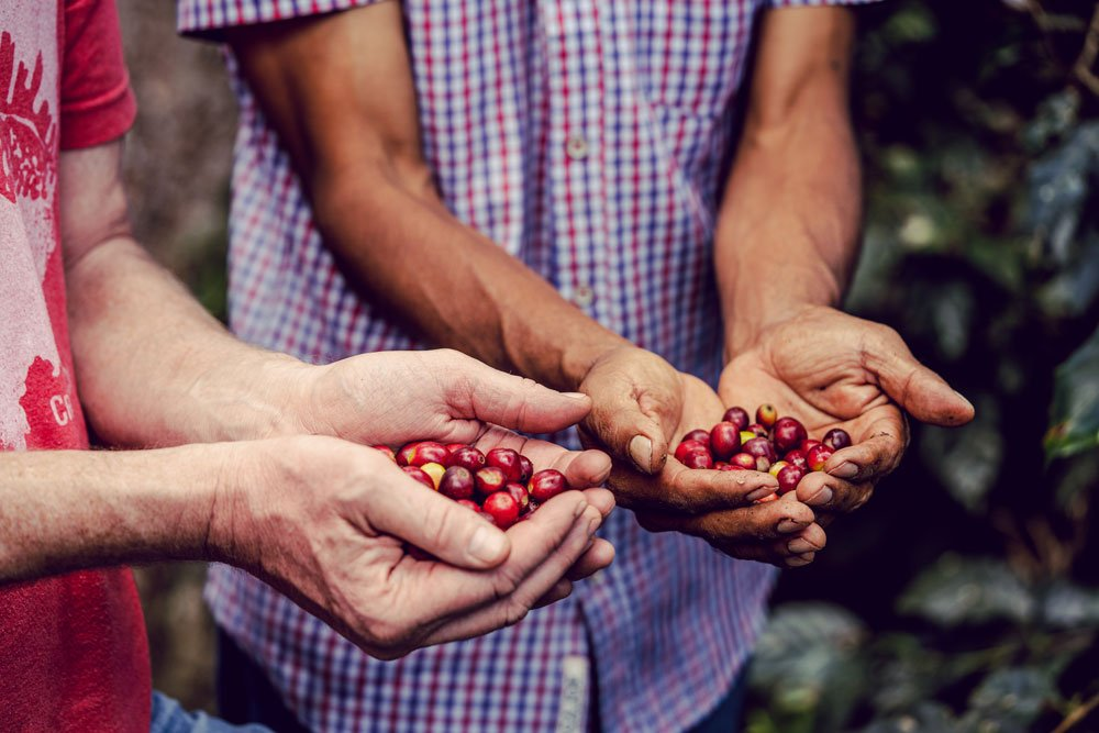 New Video: The Journey of Coffee from Cherry to Cup