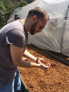 Brandon Bir inspects drying coffee beans